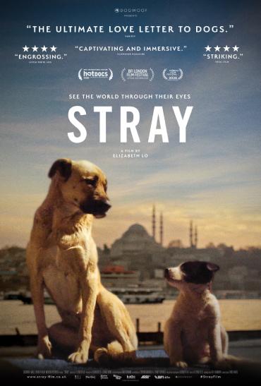 Stray image